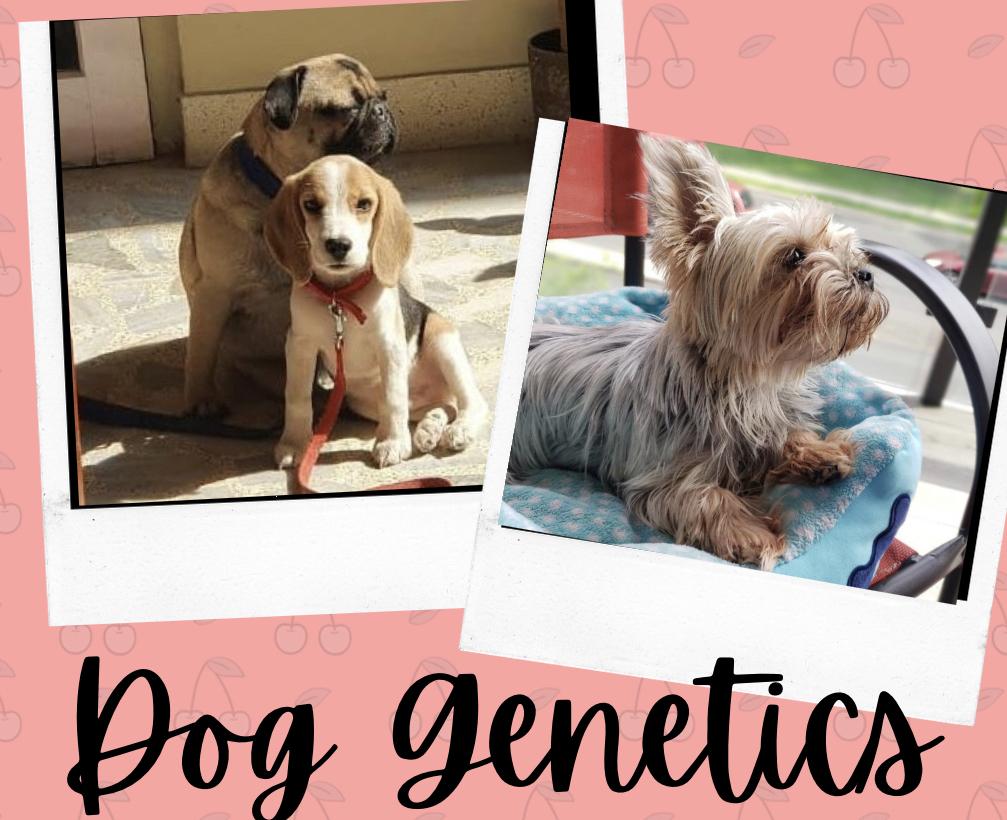 S2E3 - Dog Genetics